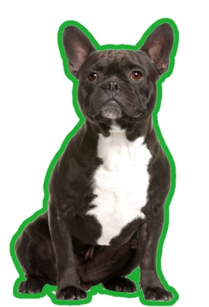 duftbaum wunderbaum franz sische bulldogge brindle. Black Bedroom Furniture Sets. Home Design Ideas