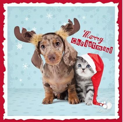 myrna weihnachtskarte dackel 2 tierisch tolle geschenke. Black Bedroom Furniture Sets. Home Design Ideas