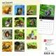 BrownTrout Tier Kalender 2018Browntrout Tier Wandkalender 2018: Squirrels - Eichhörnchen